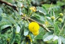 Photo of نبات القرض