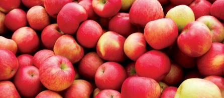 التفاح للشعر
